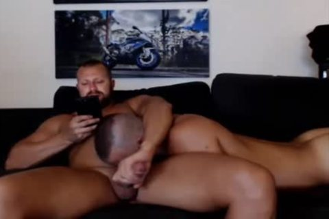 young Bear Sucks A mature Bears dong Live On Cruisingcams Com