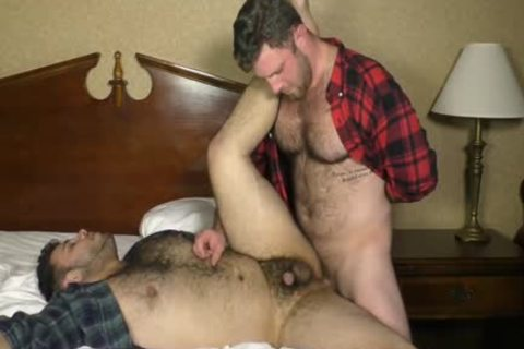 Two raw hairy fun Bears